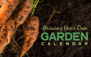 Growing Your Owen Garden Calendar